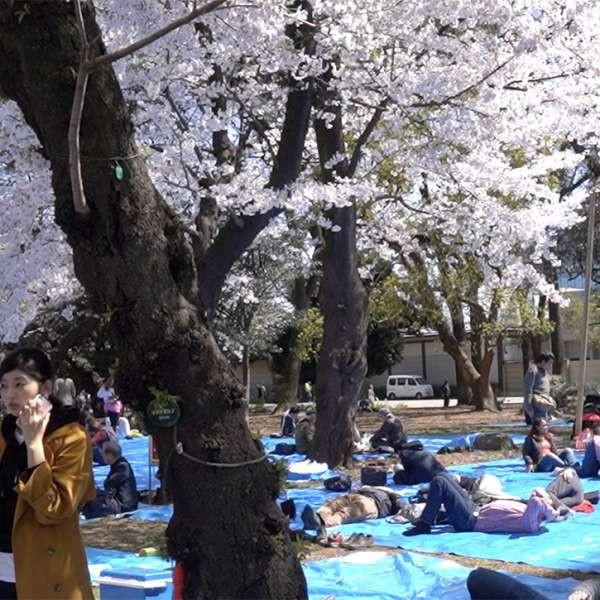 上野公园人群开阔处